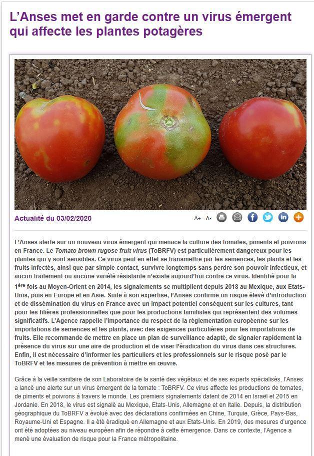 Tobrfv tomate anses